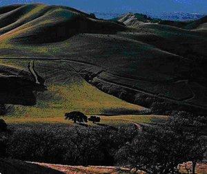 Steinbeck California